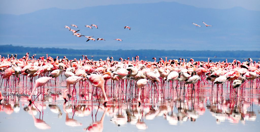 You can experience the very best of Africa's scenery on this amazing trip