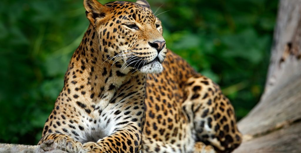 Take advantage of a once in a lifetime opportunity to explore Sri Lanka's amazing wildlife