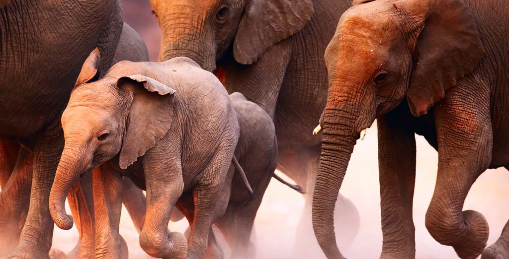 And the thrilling wildlife of Tsavo National Park and the Taita Hills, on this twin centre break