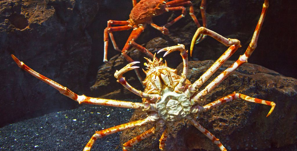 We planned a King Crab Excursion just for you