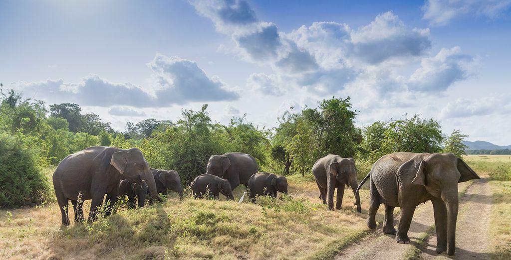Sri Lanka is famed for its abundant wildlife