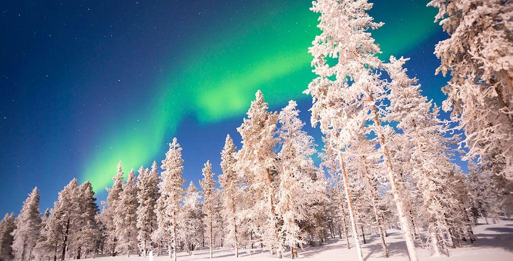 Ski holidays in December : Saariselkä, Lapland