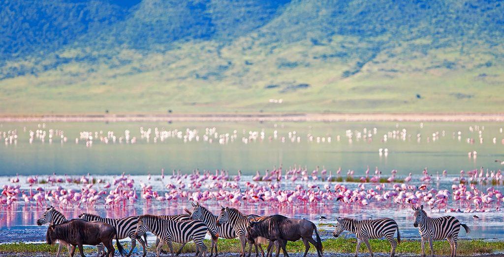 Kena Beach Hotel Zanzibar 4* with Optional Tanzania Safari