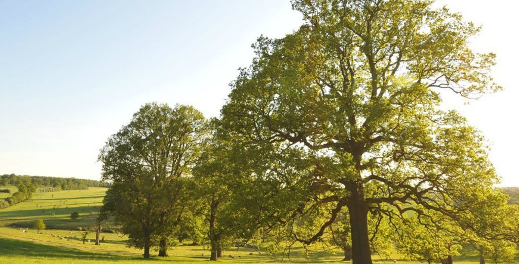 Over 1800 acres of National Trust Parkland