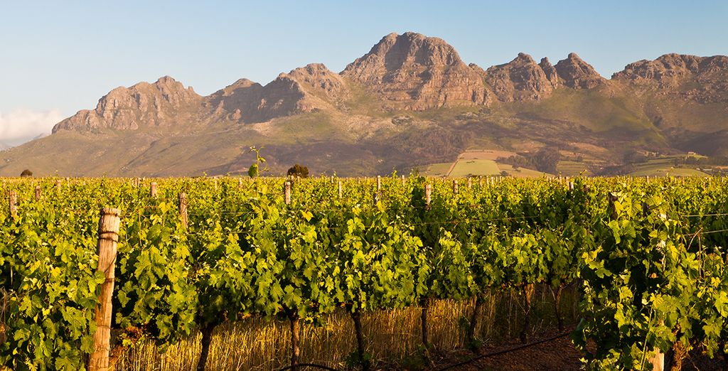 In the Winelands