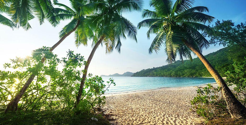 Paradise beckons
