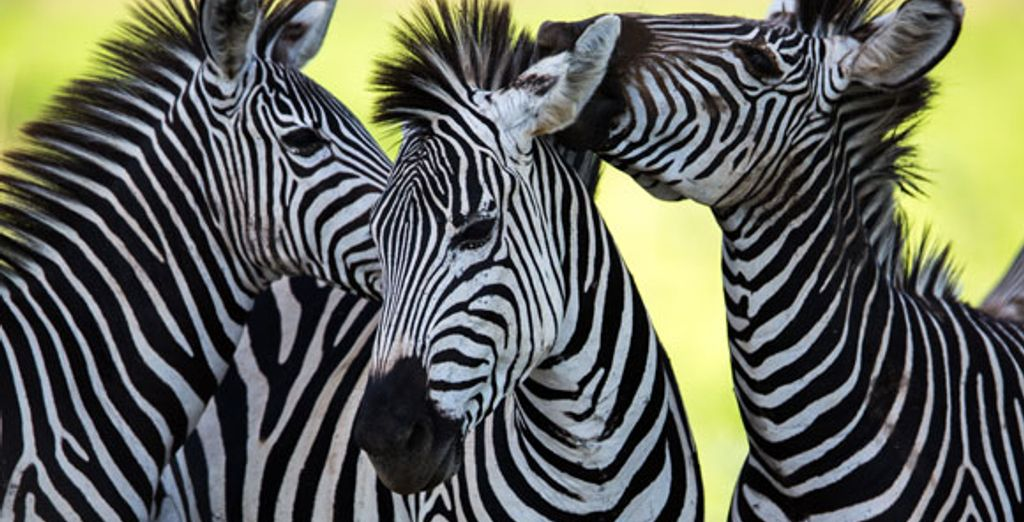 - Kenya Safari & Zanzibar Beach - Kenya Various