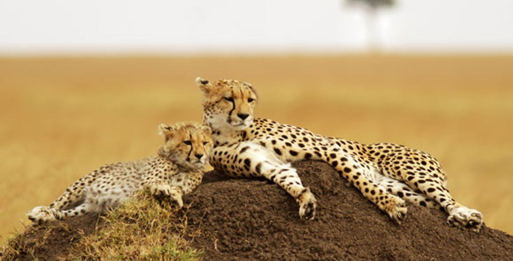- Selous Riverside Safari Camp**** & Mapenzi Beach Club**** - Various - Tanzania Various