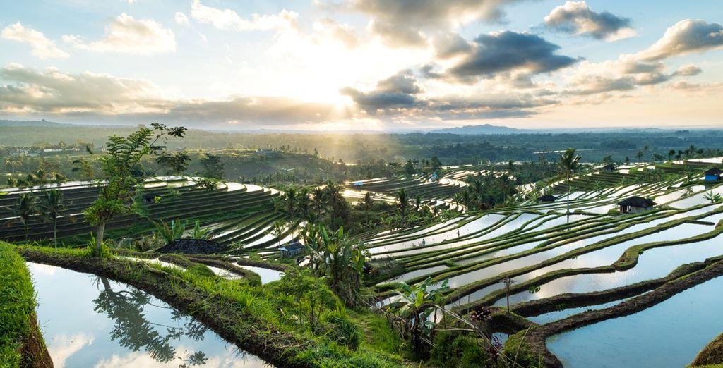 Wonders of Bali : Travel Guide