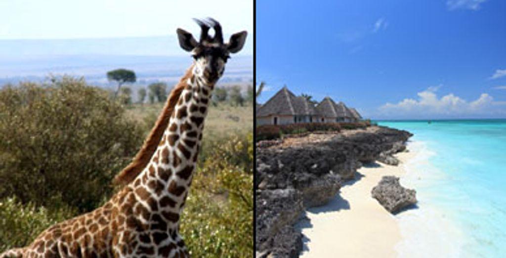 - Zanzibar & Tanzanian Safari - Tanzania Zanzibar