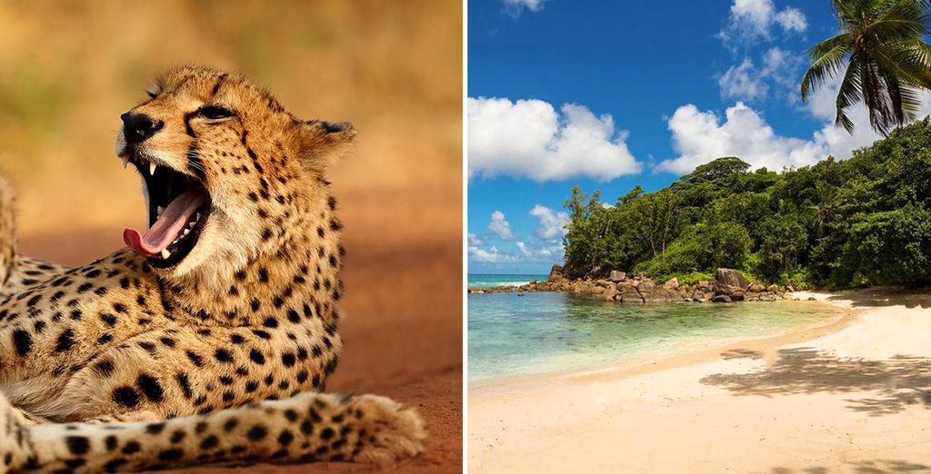 Enjoy an amazing Safari and beachside bliss on this twin centre adventure