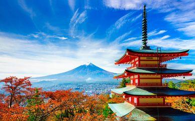 Estancia auténtica en Japón