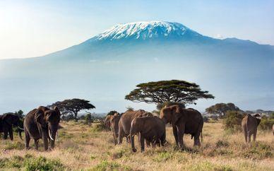 Safari en Kenia con Serena Beach Resort & Spa 5*