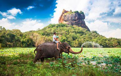 Tour privado 5* por Sri Lanka con extensión a la playa