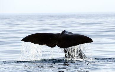 Experencia nadando con orcas y avistamiento de ballenas