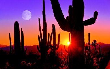 Autotour Arizona et Nouveau-Mexique - extension à Los Angeles
