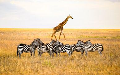 Circuit Splendeurs de la Tanzanie et extension possible
