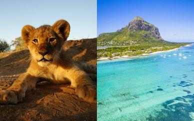Circuito Big Five in Sudafrica & Radisson Blu Azuri Resort & Spa 4*S