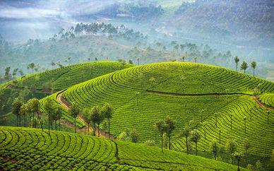 Tour Privato Sri Lanka e soggiorno mare con volo Emirates