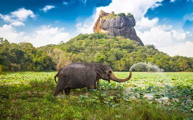 Tour dello Sri Lanka in 5 notti + estensione mare