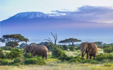Kenya Discovery Safari