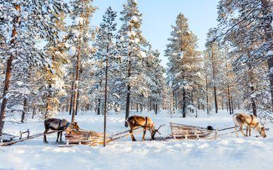 Polar Adventure in Scandinavia - Sweden, Finland & Norway
