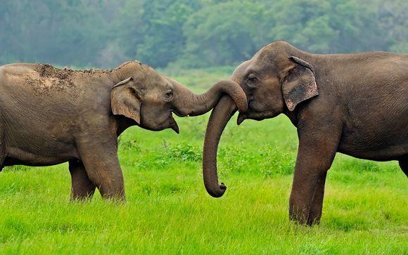 Welkom in.. Sri Lanka