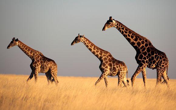Willkommen in... Kenia !