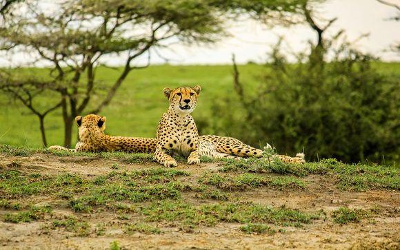 Ihre optionalen Safaris