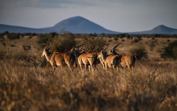 Safari de 4 días y 3 noches
