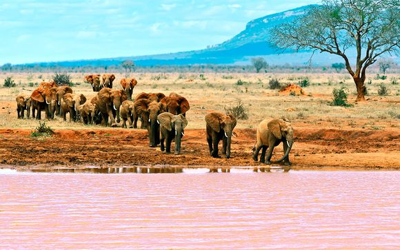Safari en Tsavo East - 7 Noches