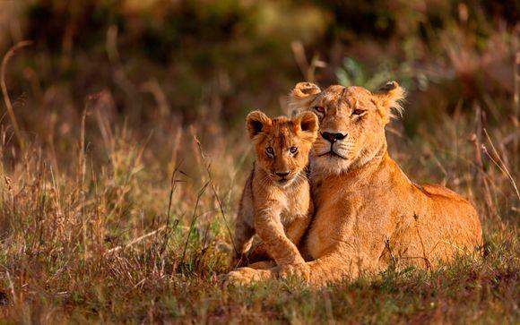 Tus safaris