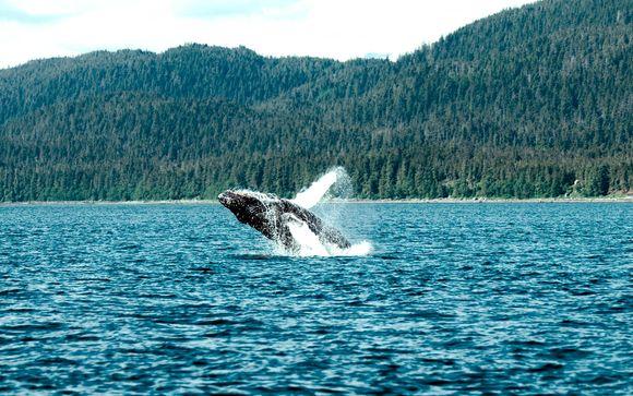 Canadá Toronto - Canadá con avistamiento de ballenas desde 1.704,00 €