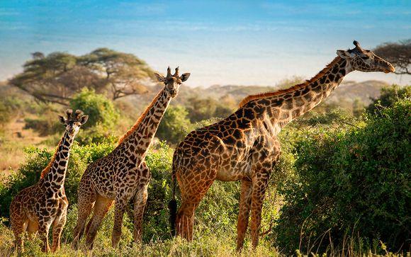 Safari de 1, 2 o 3 noches