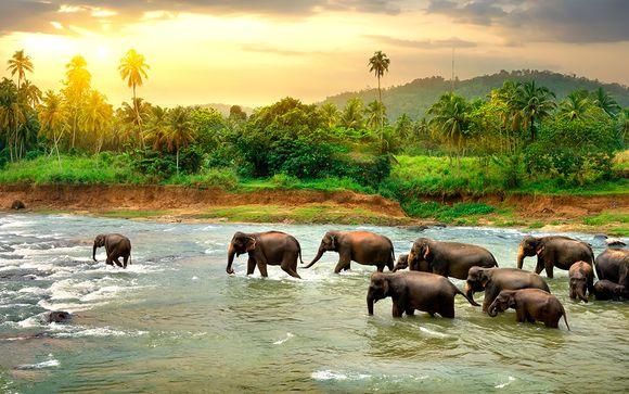Circuito privado en Sri Lanka en 5* o 5* Luxury