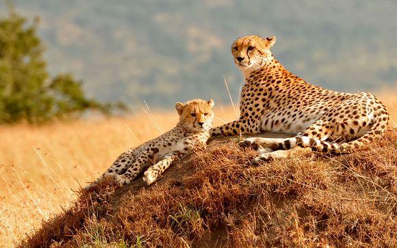 Tu safari