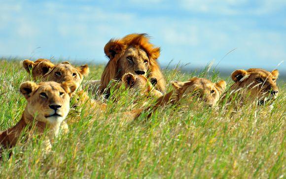 Preextensión con safari (opción 2)