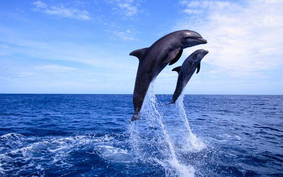 Excursión opcional con delfines