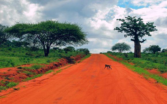 Zoom sur vos safaris possibles