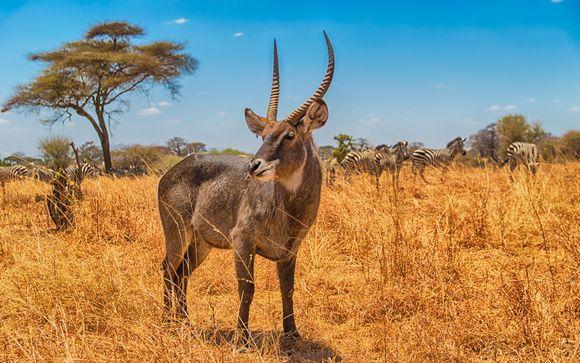 Rendez-vous... du Kilimandjaro à Zanzibar