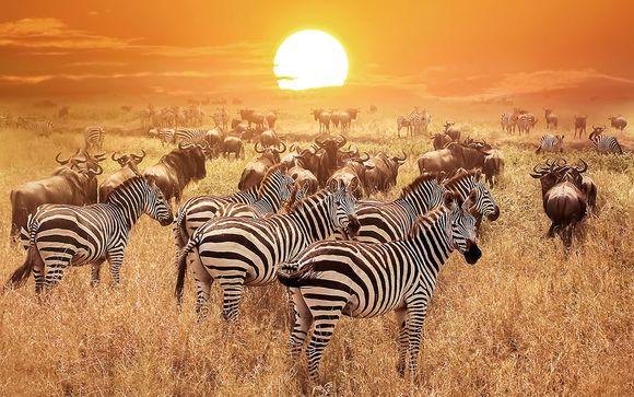Rendez-vous... en Tanzanie et à Zanzibar