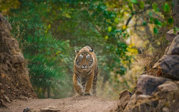 Circuit Triangle d'Or et Safari au parc Ranthambore - 9j/8n