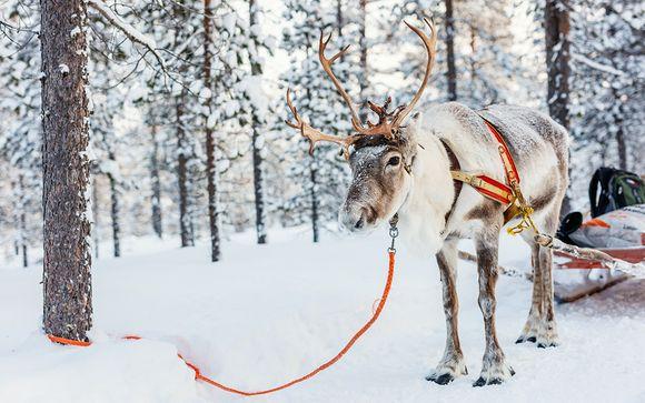 Le meilleur de la Laponie en 6 ou 7 nuits