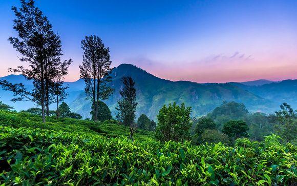 Circuit privatif Découverte du Sri Lanka en 8 ou 10 nuits