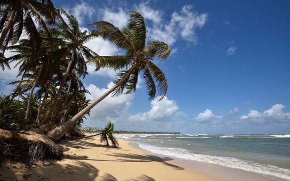 Photographie de la République Dominicaine, ses palmiers et ses plages de sable fin