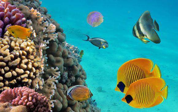 Observation des fonds sous marins, poissons et coraux au cœur de l'océan et son eau turquoise