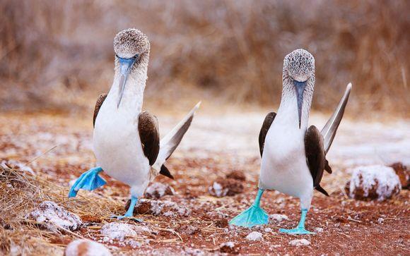 Votre extension aux Galapagos