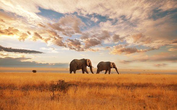 Zoom sur vos safaris possibles (offre 2)