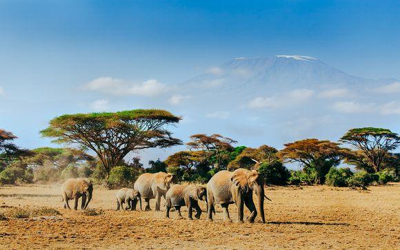 Zoom sur vos safaris possibles (offre 1)