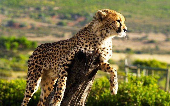 Alla Scoperta del Sud Africa